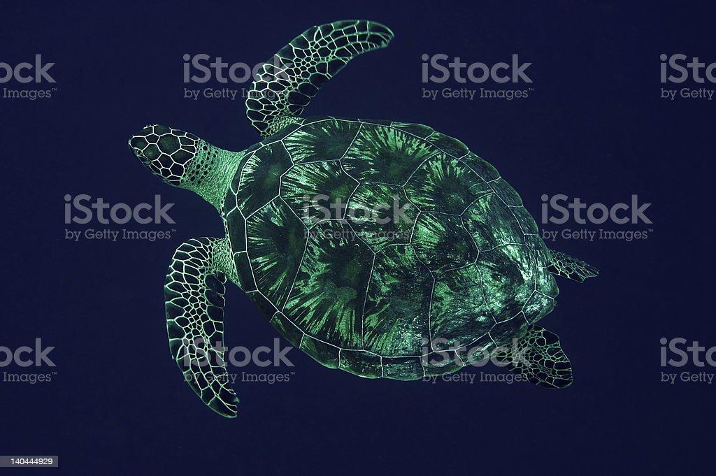 Tartaruga foto royalty-free