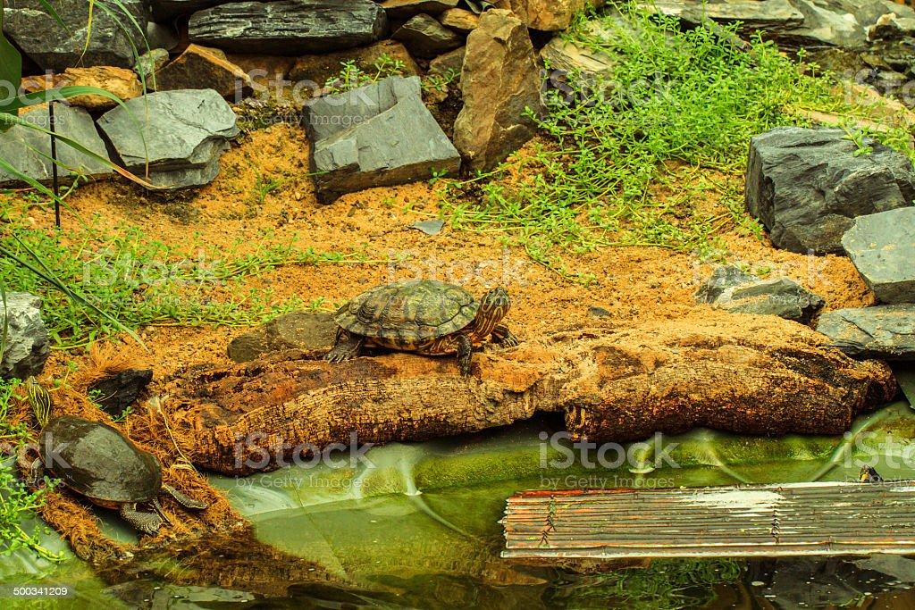 Turtle Lizenzfreies stock-foto