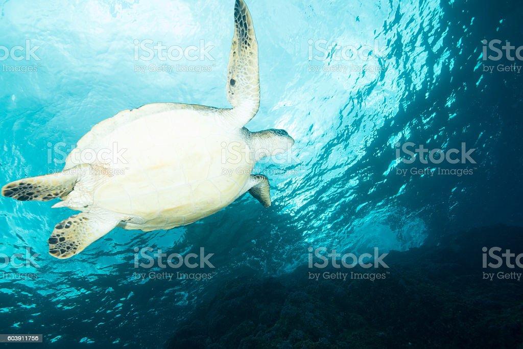 Tartaruga foto de stock royalty-free
