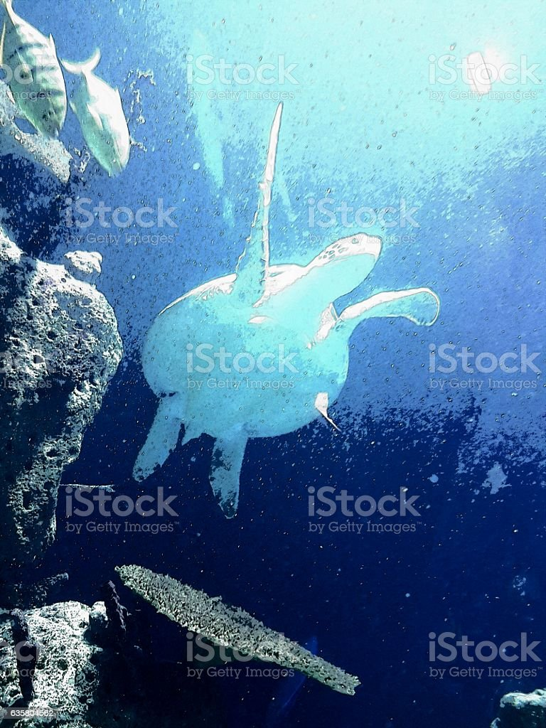 schildkröte stock photo