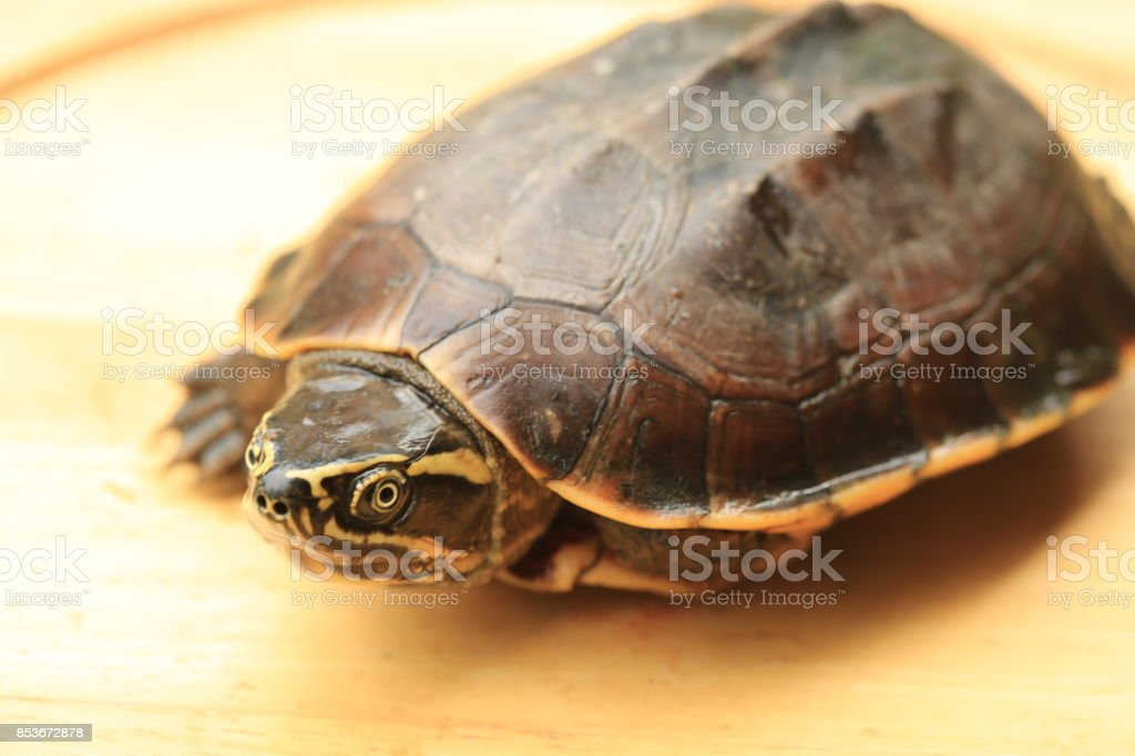 Turtle stock photo