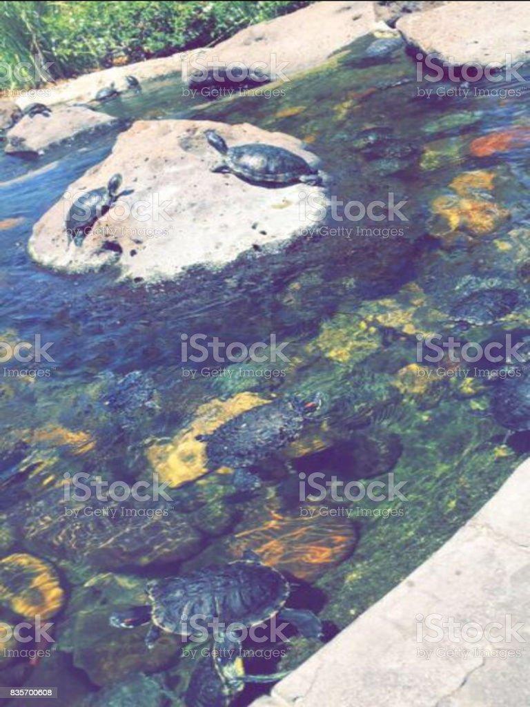 Turtle Pond stock photo