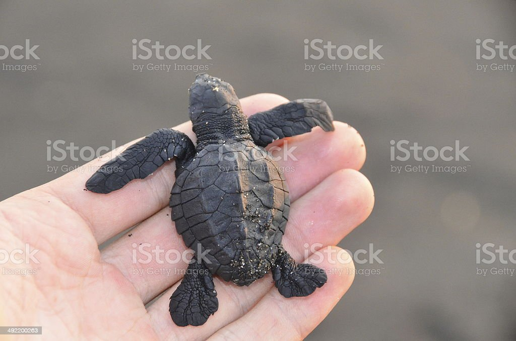 Turtle Protection stock photo