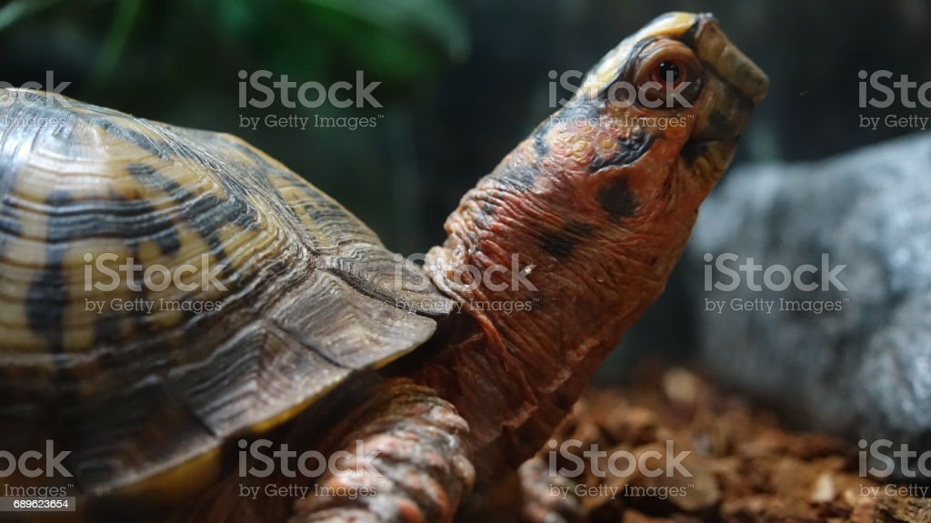 Turtle Reptiles And Animals
