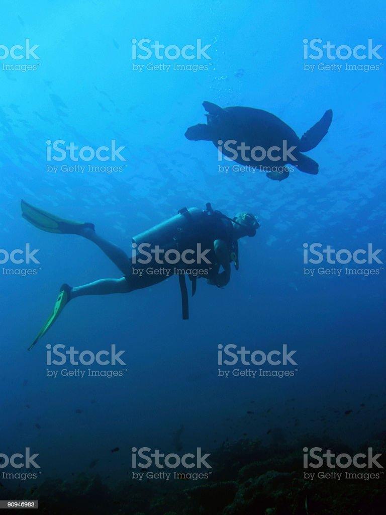 turtle scuba diver underwater sipadan island royalty-free stock photo