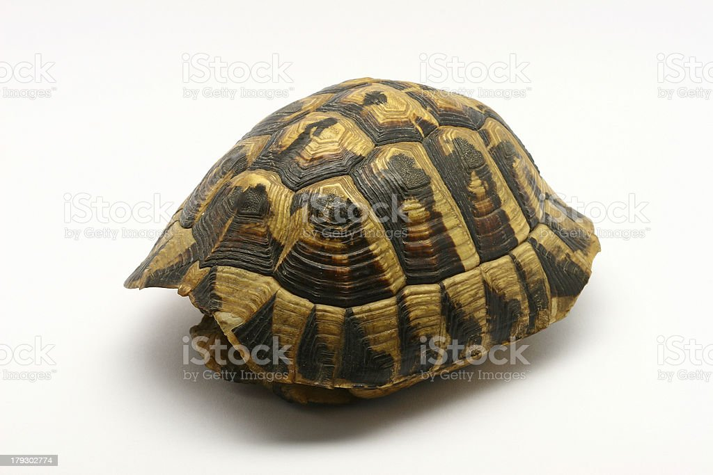 Turtle shell isolated on a white background stock photo