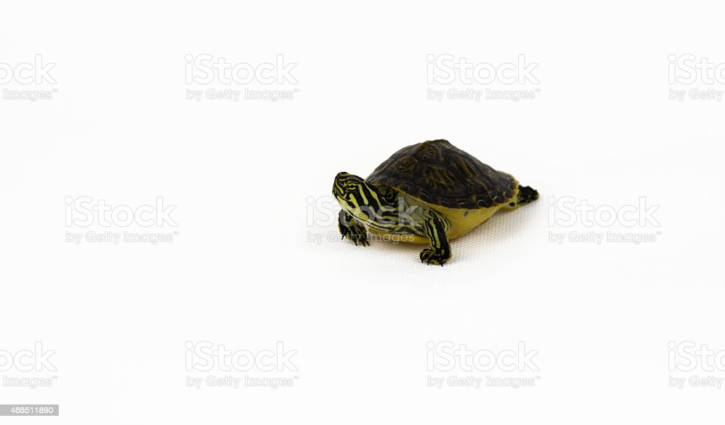 Turtle Shoot stock photo