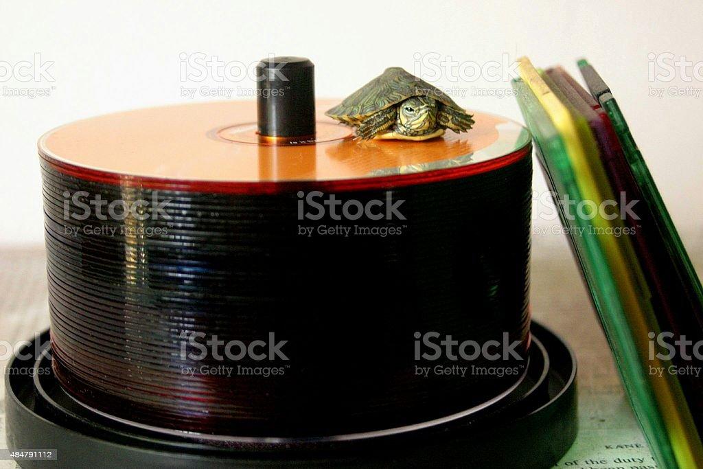 Turtle speed stock photo