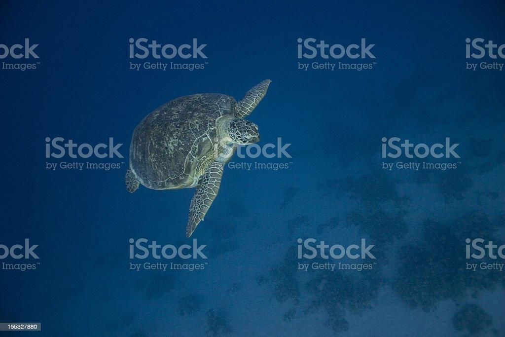 Tortue aquatique nage passé 2 photo libre de droits