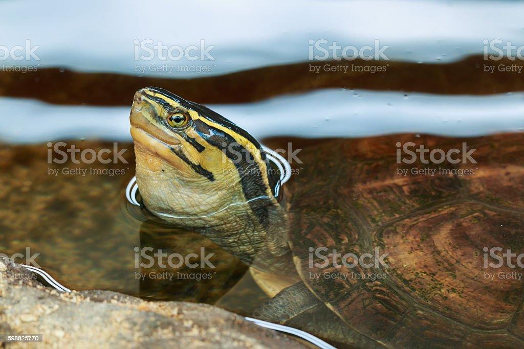 Turtle, tortoise, animal. stock photo