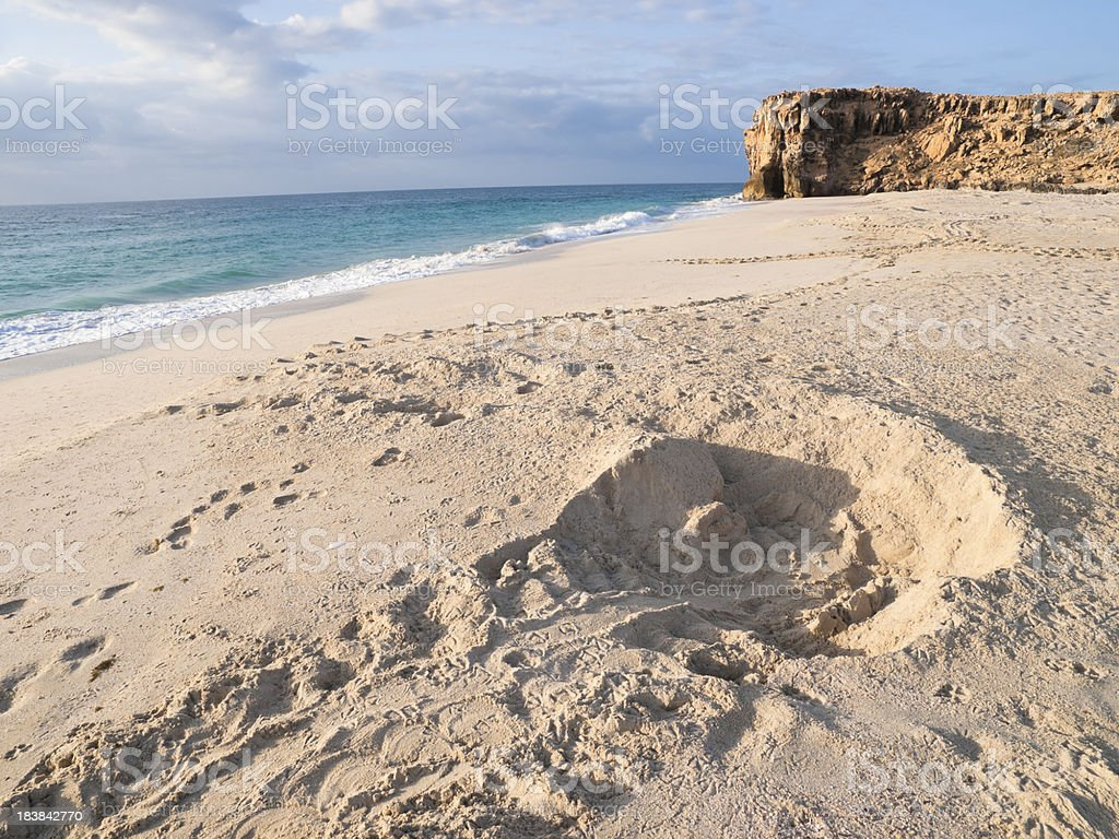 Turtle track royalty-free stock photo