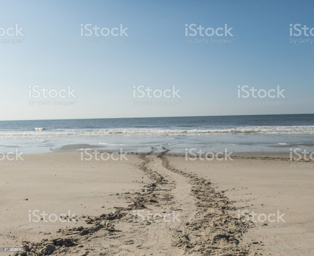 Turtle tracks in the sand stock photo
