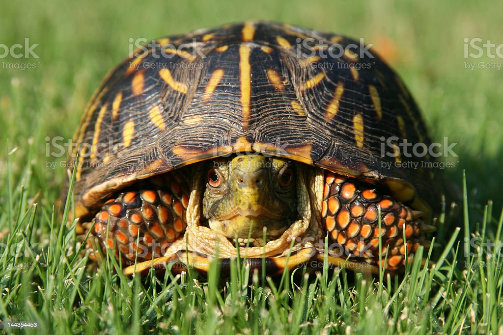 Turtle Turf stock photo