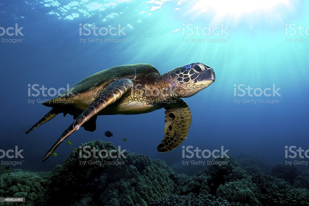 Turtle underwater - inmiddle of the deep blue sea stock photo