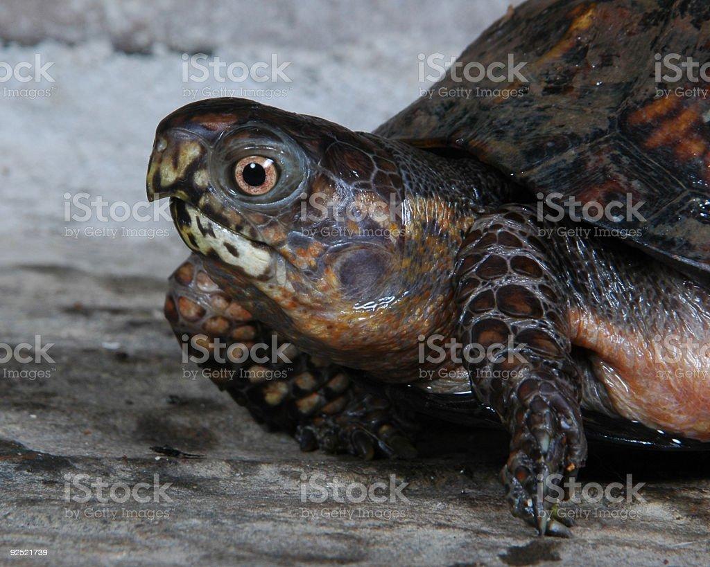 Turtle3 stock photo