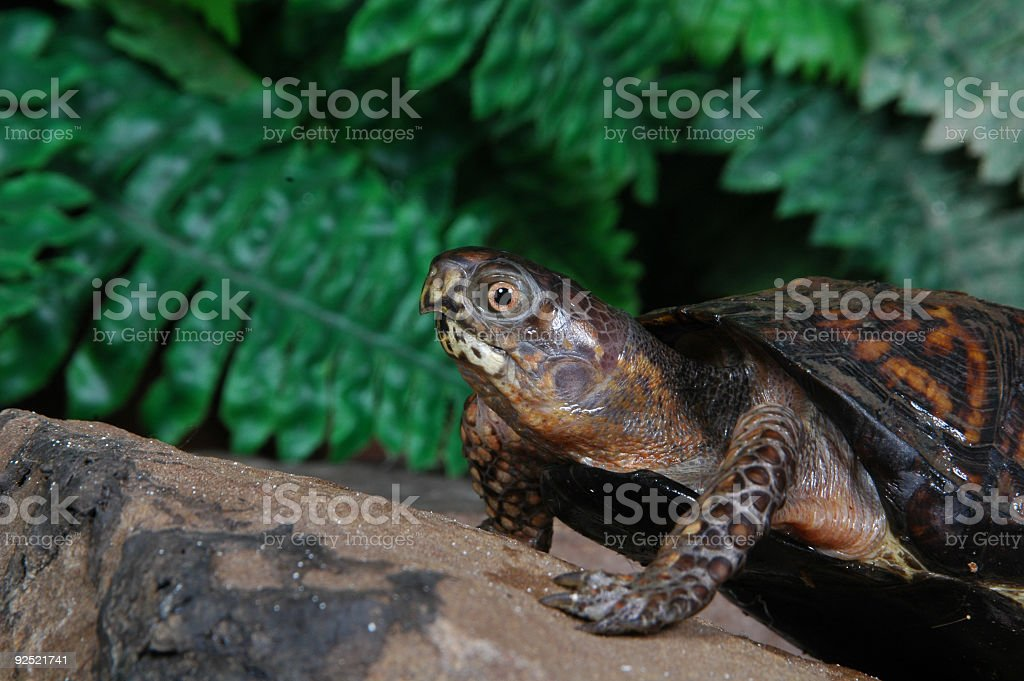 Turtle5 stock photo