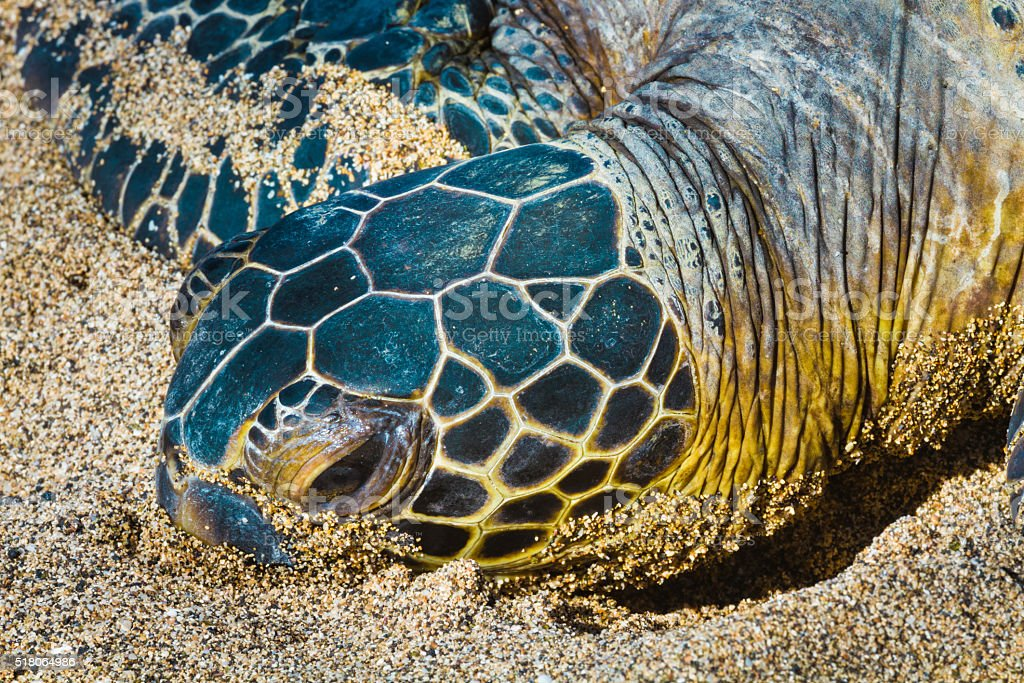 Turtles close-up stock photo
