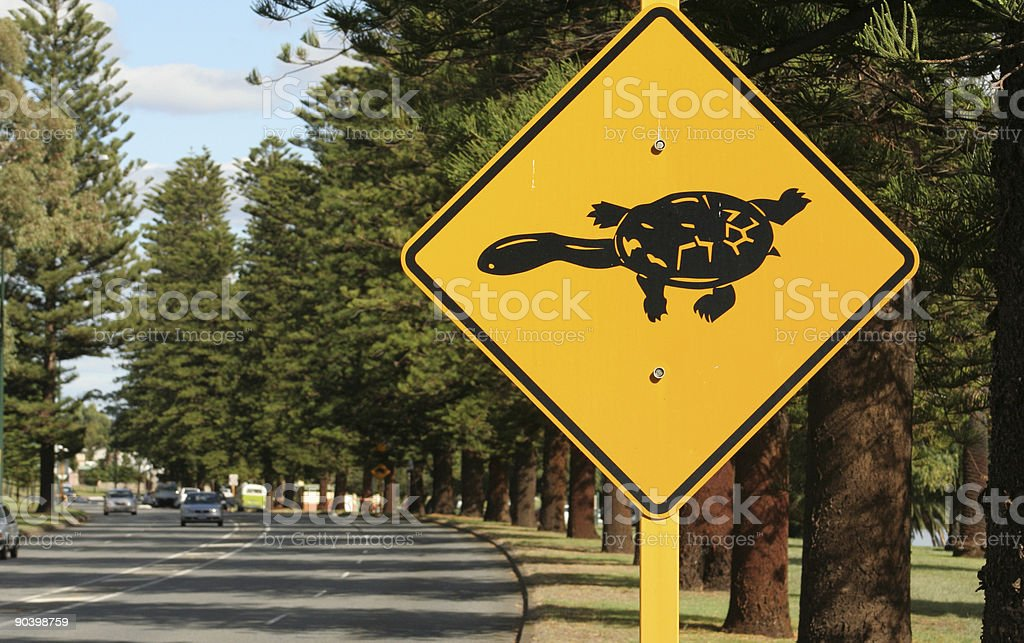 Turtles crossing stock photo