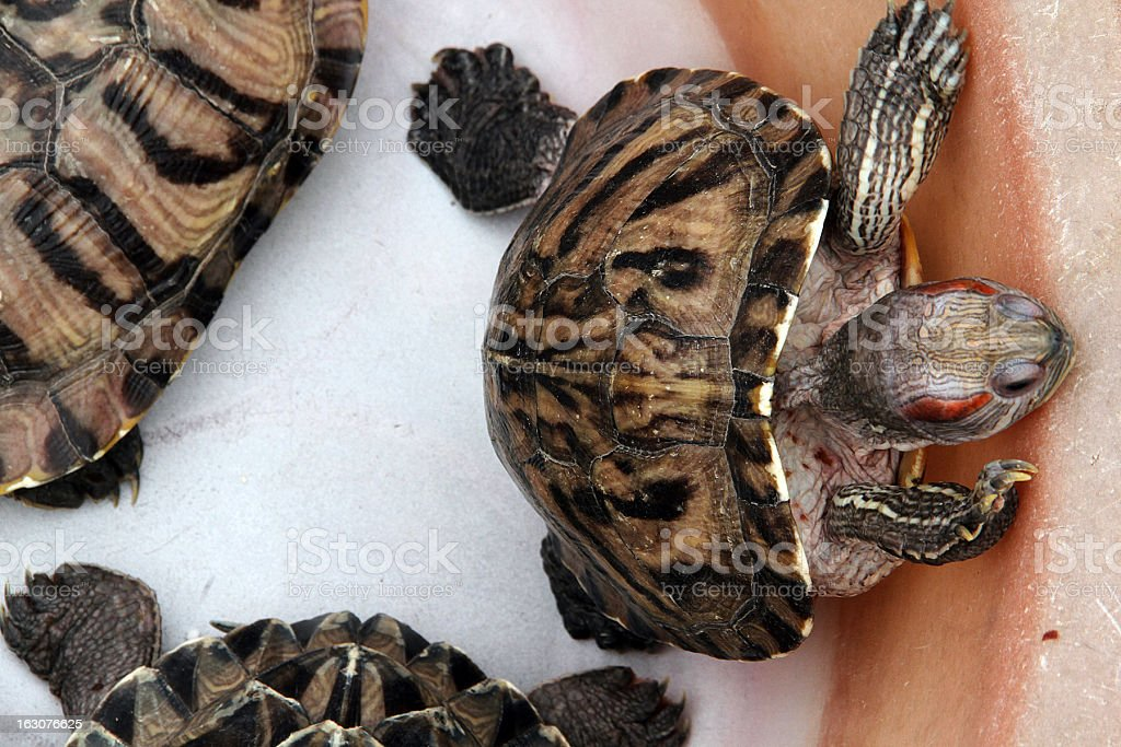 Turtles for Sale stock photo