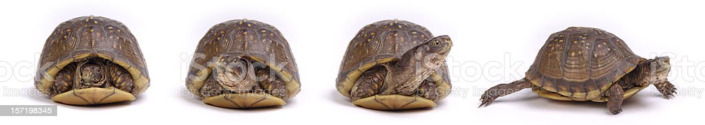 Turtles: Get Up and Go! royalty-free stock photo