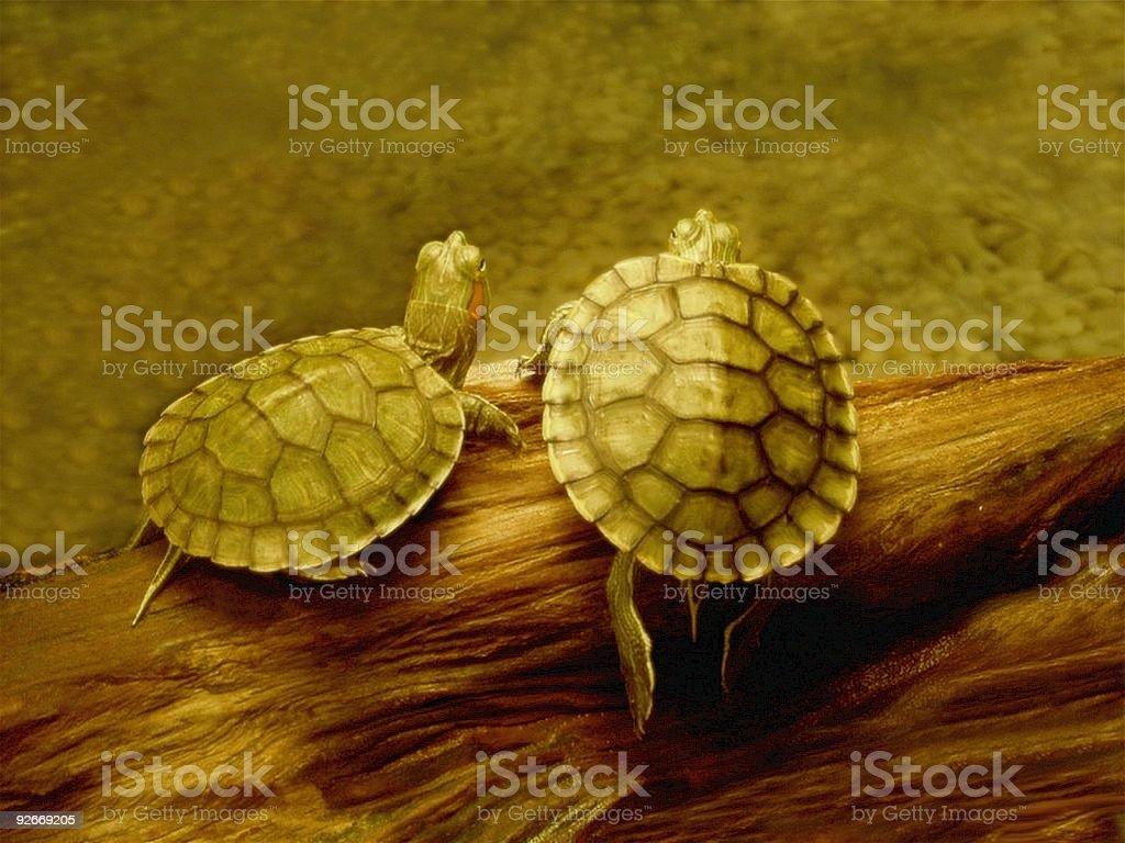 Turtles on a Log stock photo