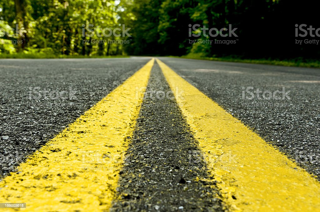 Turtle's View of Forest Road royalty-free stock photo