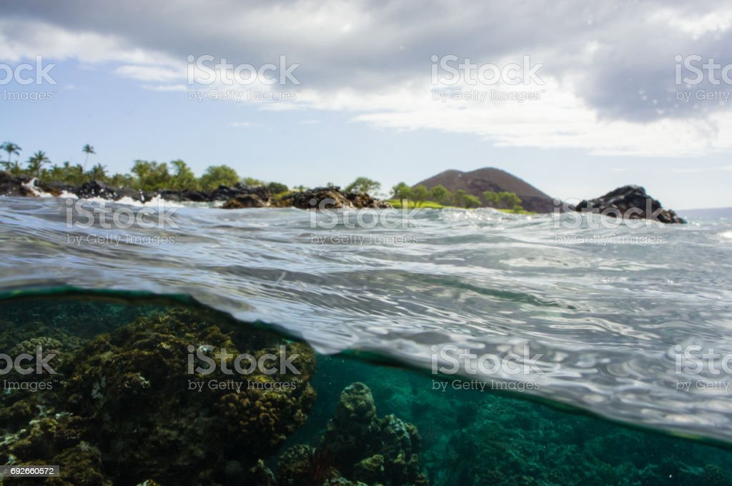 A turtle's view, over and under the water, of coral reef and shoreline. stock photo