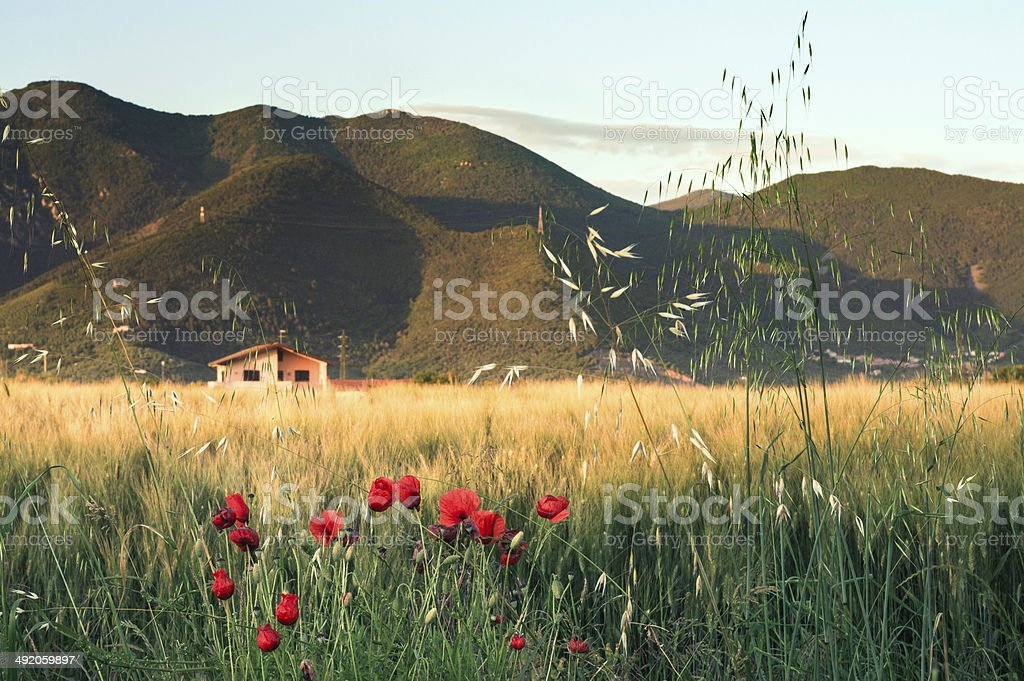 Tuscan countryside, Springtime stock photo