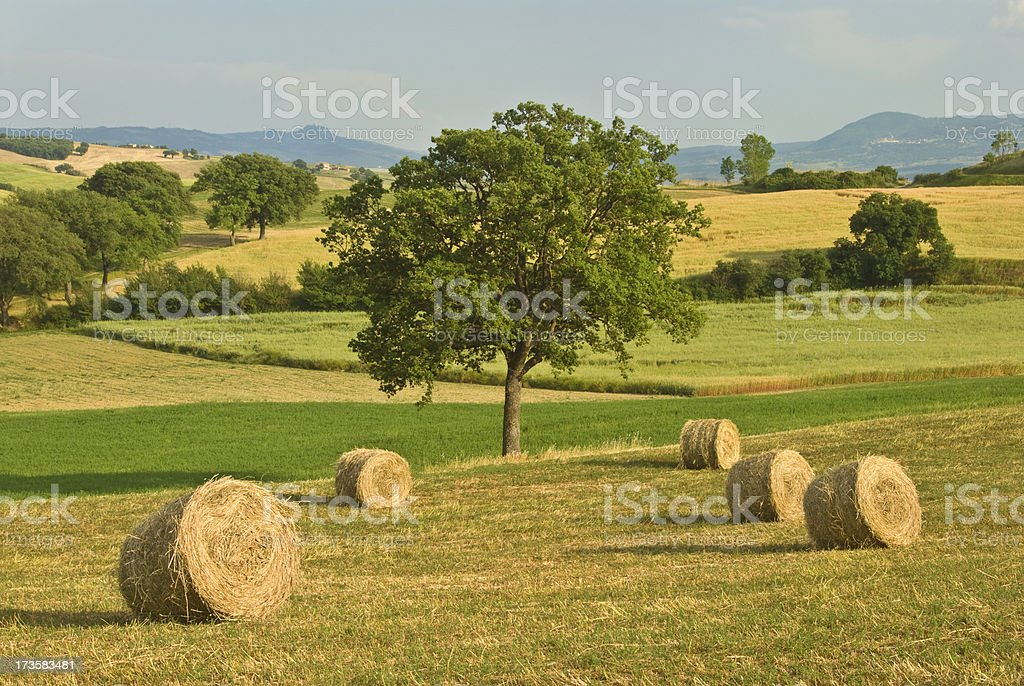 Tuscan farm royalty-free stock photo
