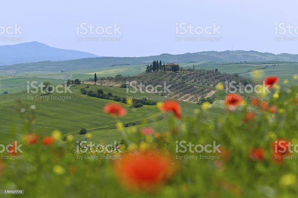 Tuscan farmhouse & vineyard royalty-free stock photo