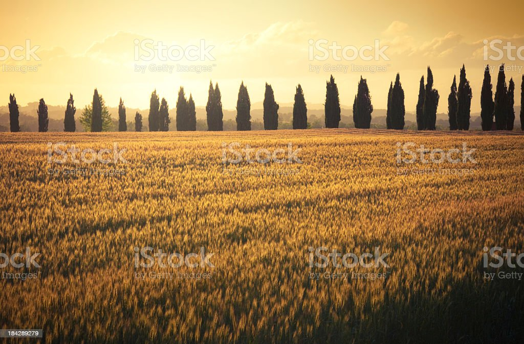 Tuscan field royalty-free stock photo
