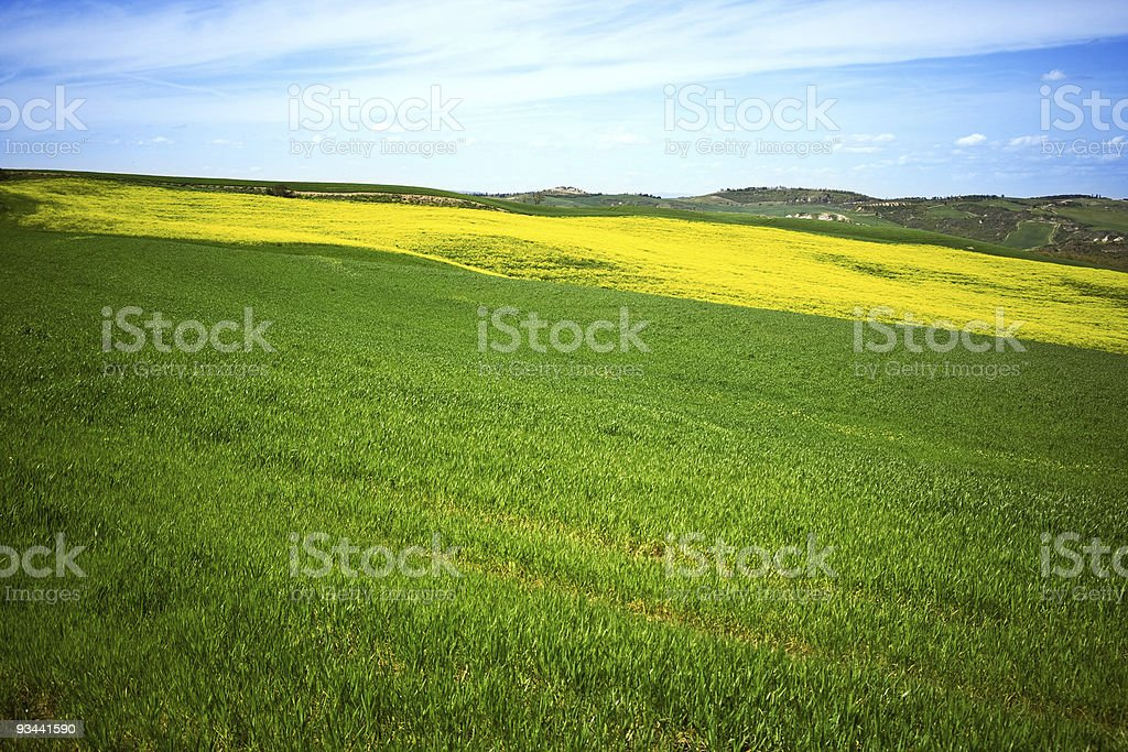 Tuscan fields royalty-free stock photo