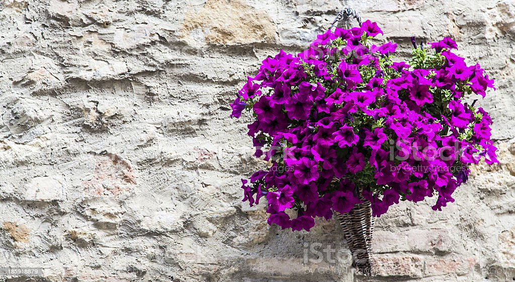 Tuscan flowers royalty-free stock photo
