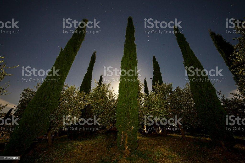 Tuscan garden at night stock photo
