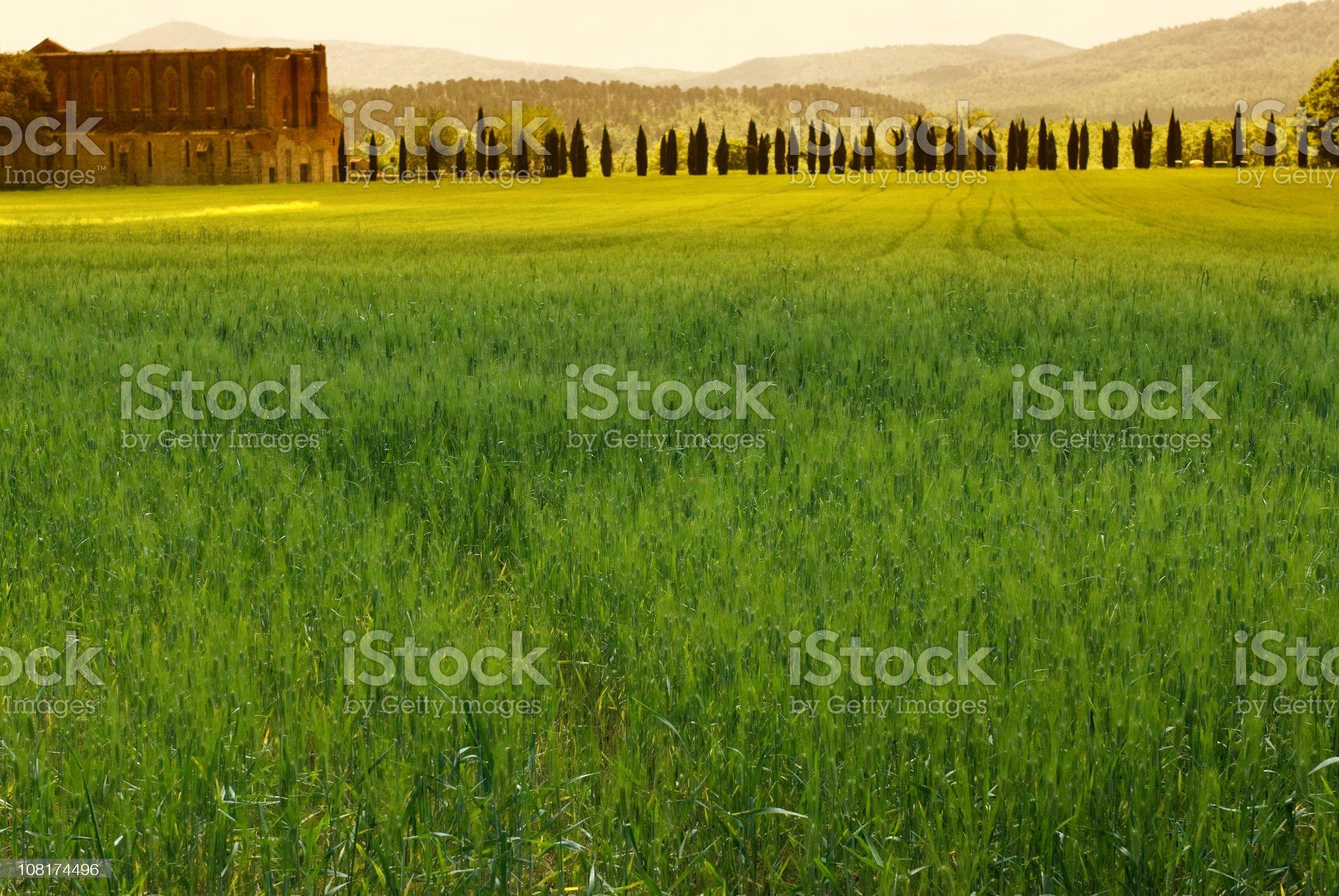 Tuscan Grassland royalty-free stock photo