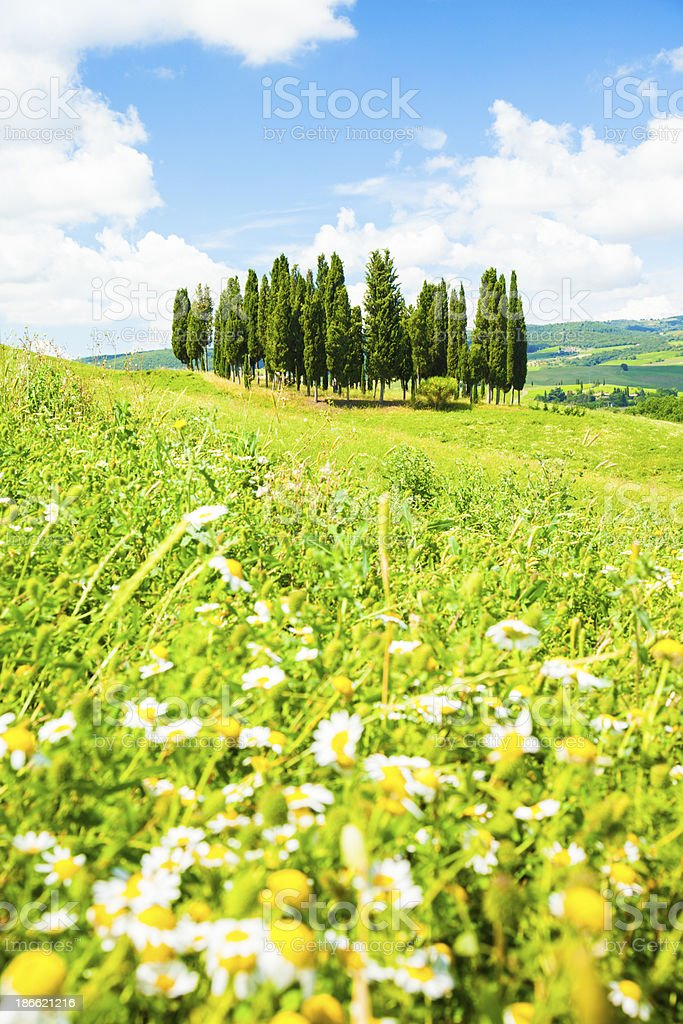 Tuscan landscape royalty-free stock photo