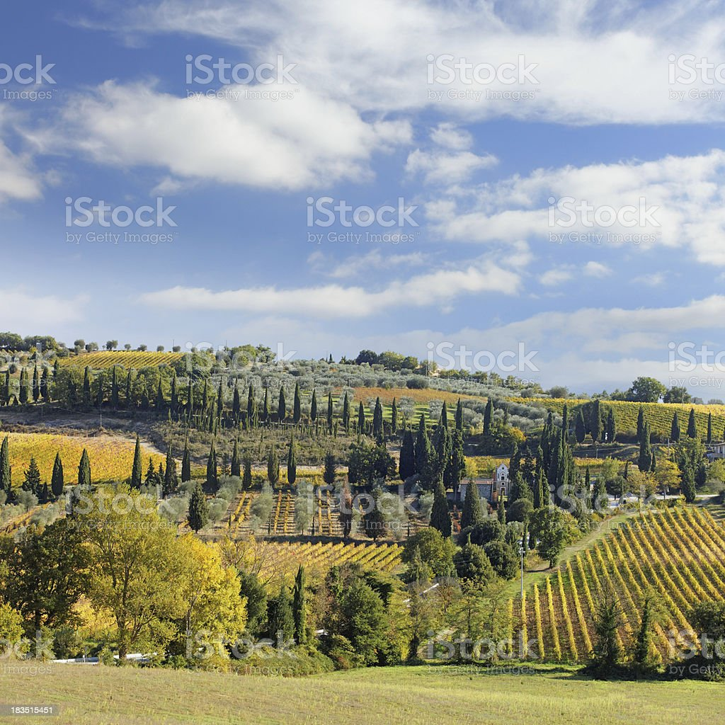 Tuscan landscape with vineyards royalty-free stock photo