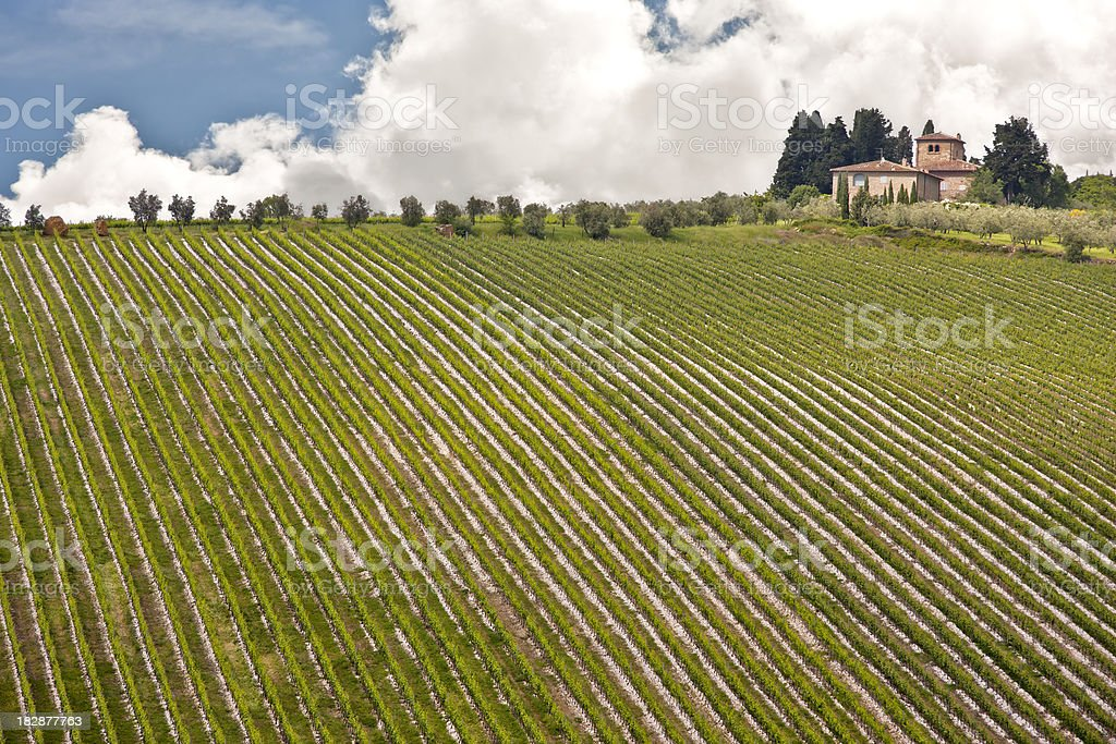 Tuscan Vineyard and Farmhouse in the Chianti Region, Italy stock photo