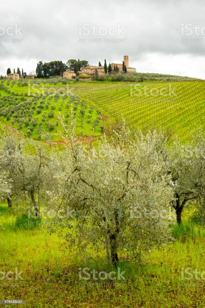 Tuscan vineyard royalty-free stock photo