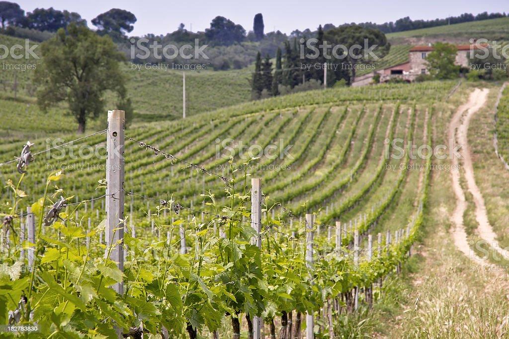 Tuscan Vineyards in the Chianti Region, Italy royalty-free stock photo