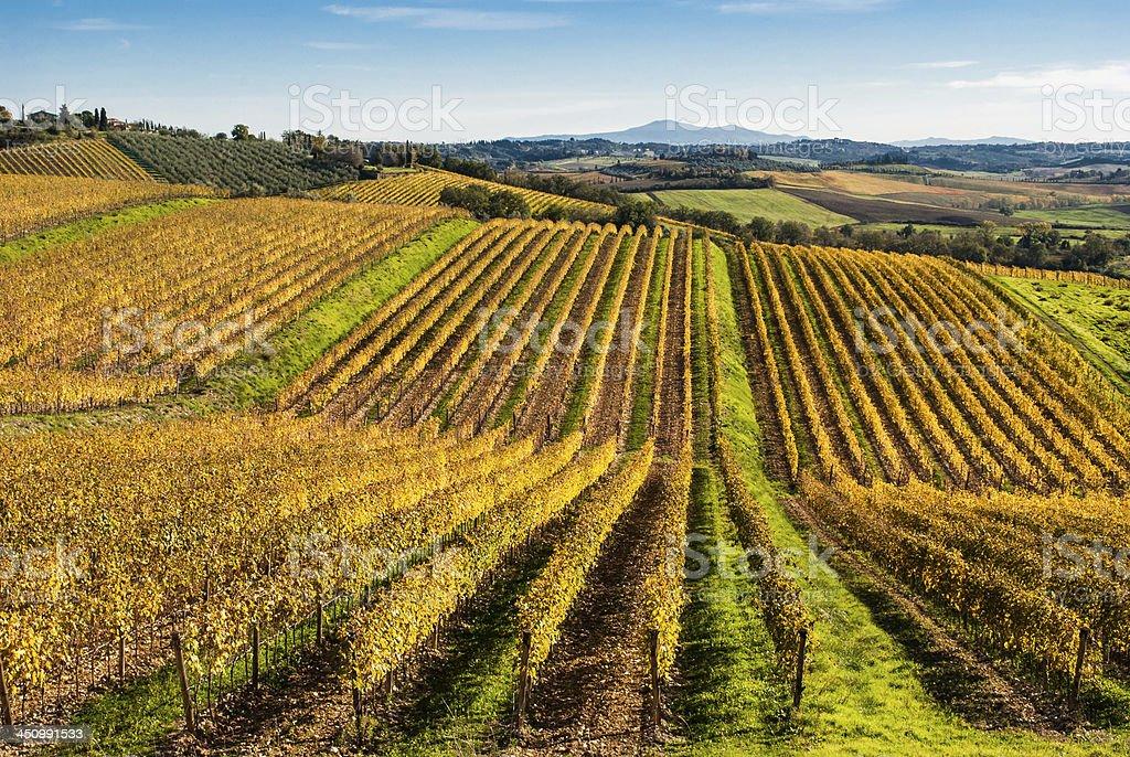 Tuscany, Chianti vignards royalty-free stock photo