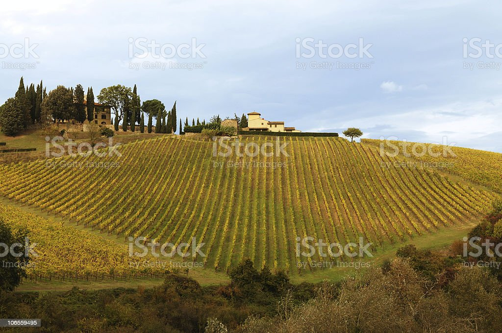 Tuscany Chianti Vineyards Fall Time Blue royalty-free stock photo