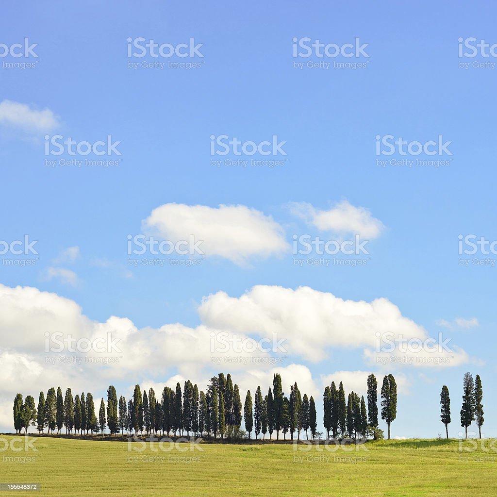 Tuscany, Cypress Trees on a hill rural Chianti landscape, Italy. stock photo