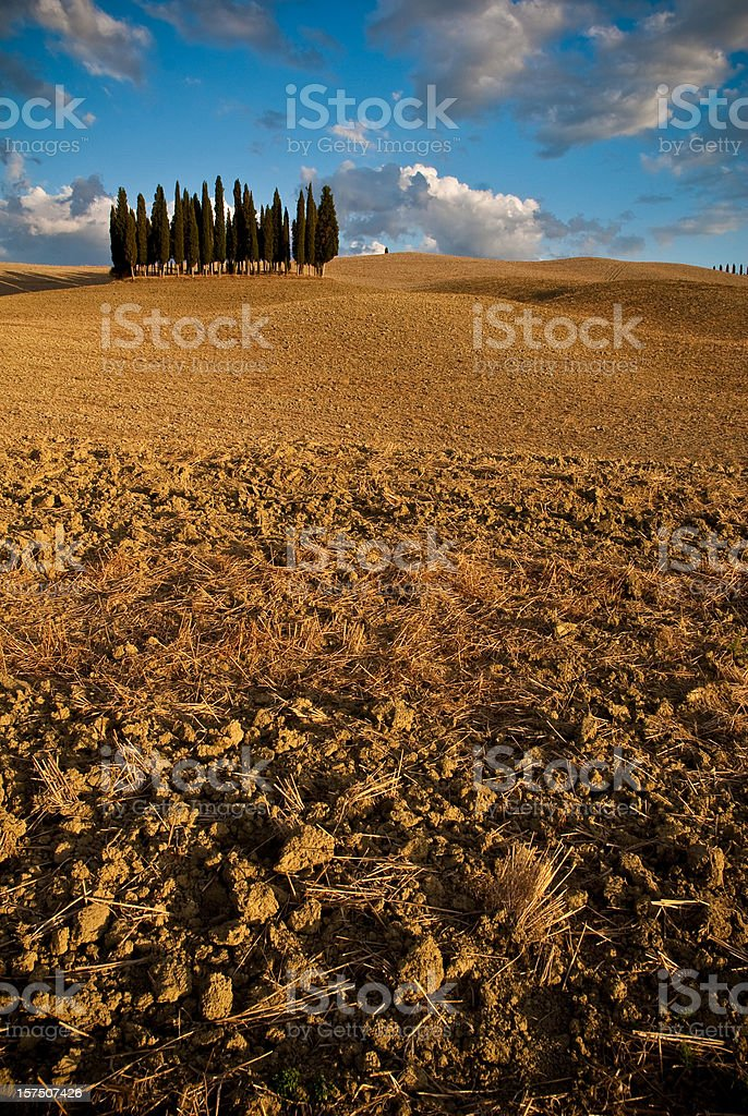 Tuscany Cypress trees royalty-free stock photo