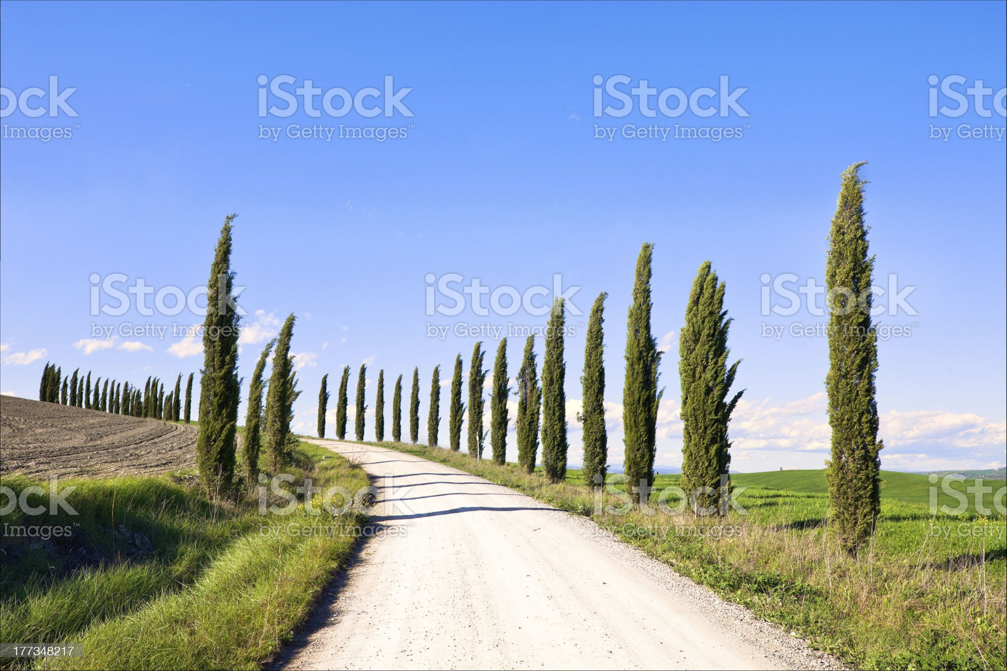 Tuscany, Cypress Trees white road landscape, Italy, Europe. royalty-free stock photo