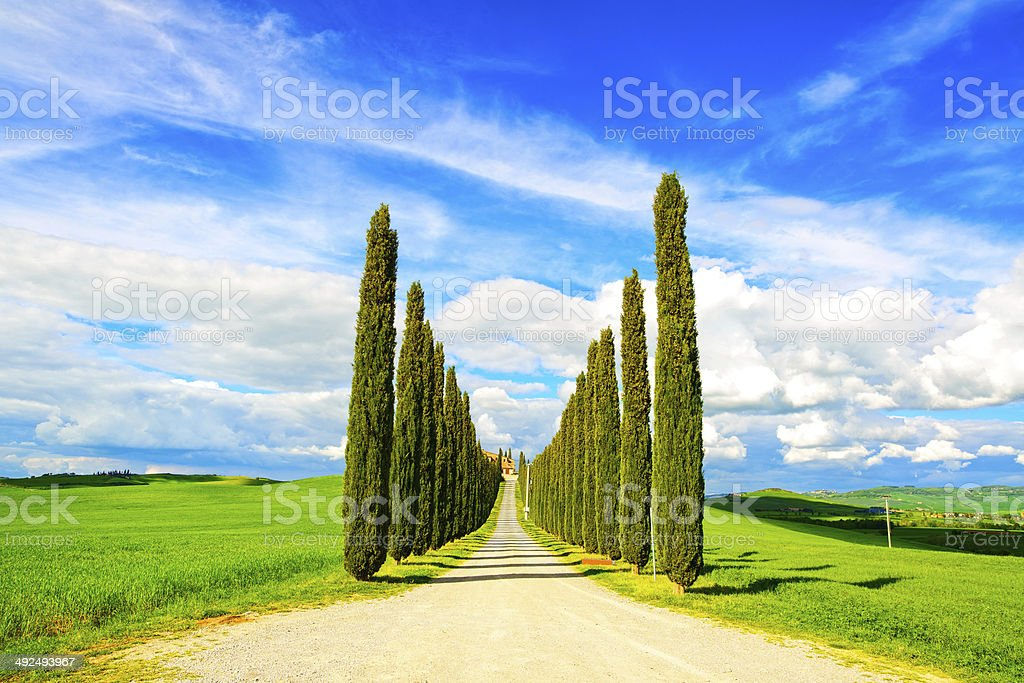 Tuscany, Cypress Trees white road rural landscape, Italy, Europe royalty-free stock photo