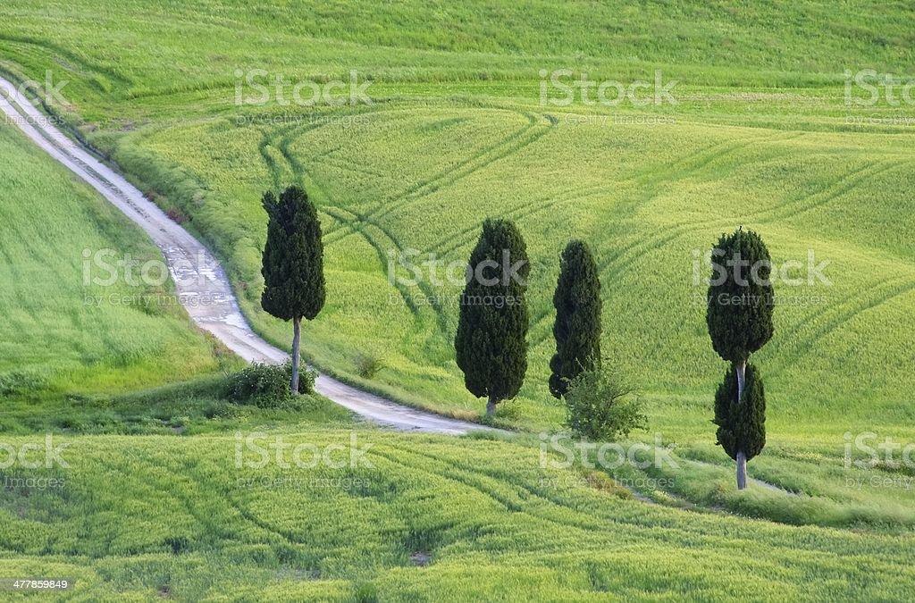 Tuscany cypress trees with track stock photo