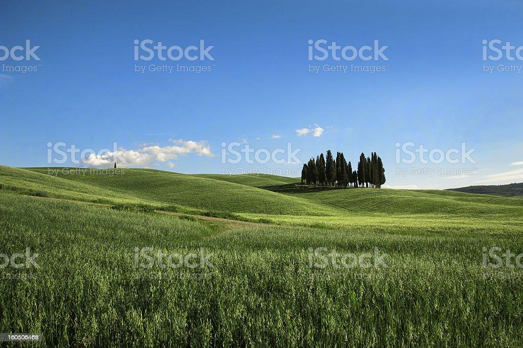 Tuscany - Cypresses royalty-free stock photo