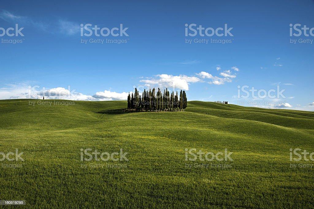 Tuscany Cypresses royalty-free stock photo