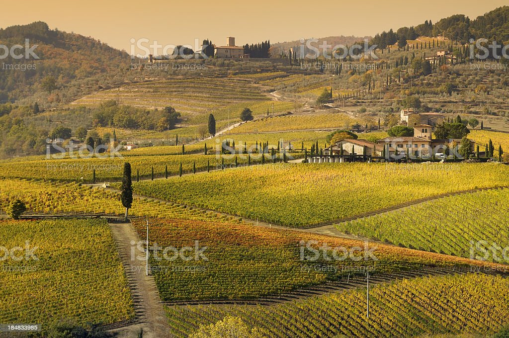 Tuscany Farmhouse and Vineyard in Fall at Sunset royalty-free stock photo